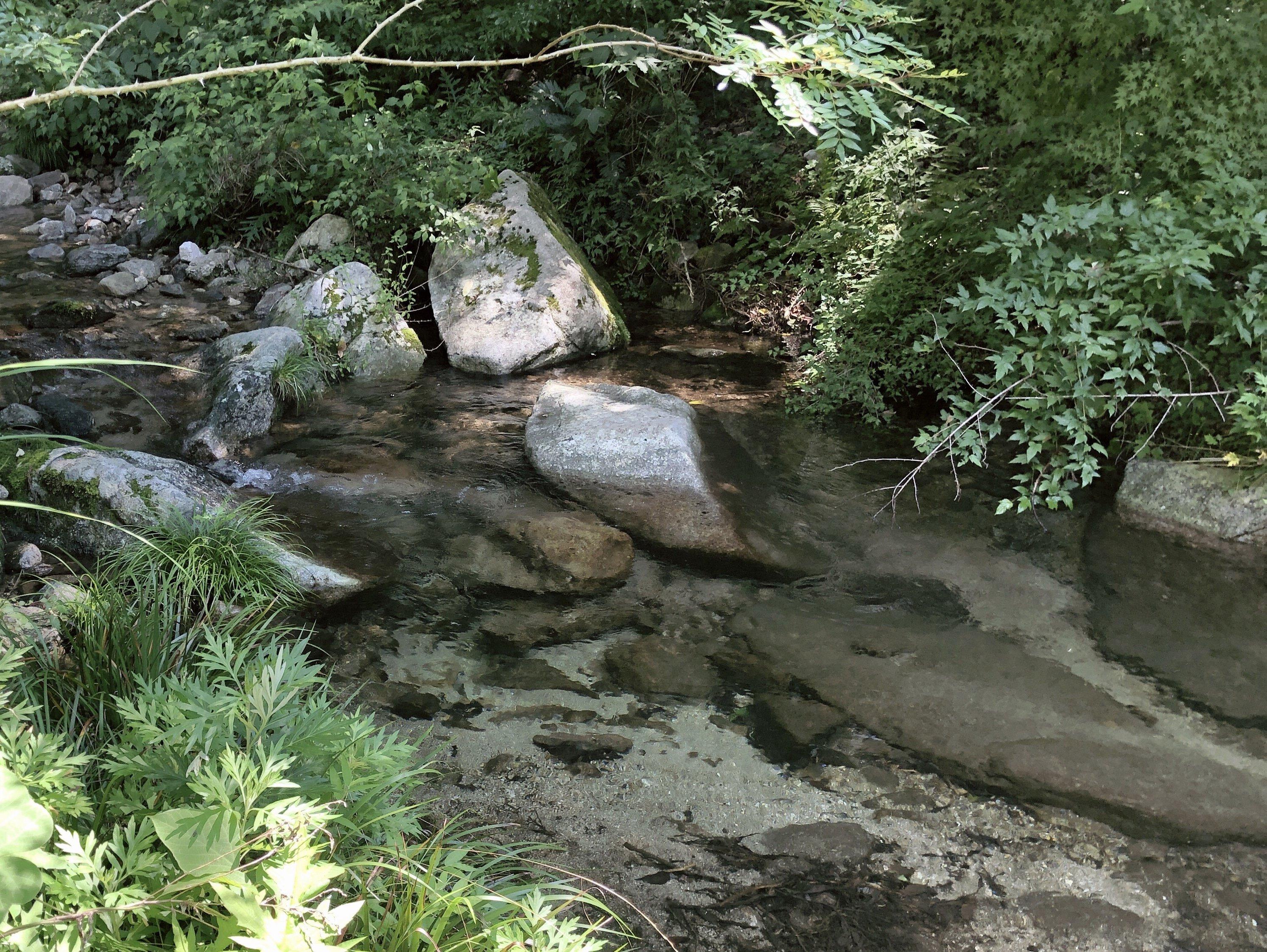 こんにちは。今日はいつかの森林浴で訪れた場所をアップします…