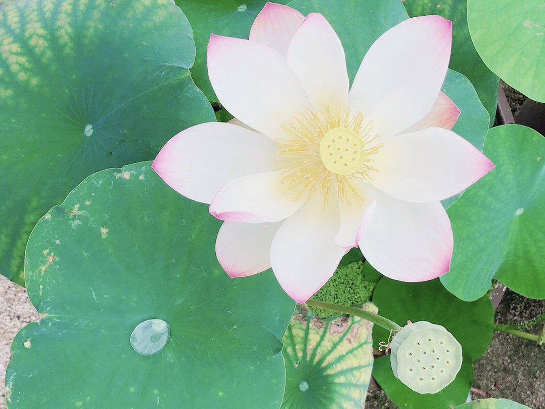 こんにちは!今日はお花を見に行ってきました。雨が心配だった…