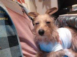 こんばんは。今、うちの犬がとんでもない表情しています(笑)…