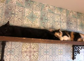 少し前に猫カフェ行った時のお写真(*´∀`*)2匹揃って面白いポー…