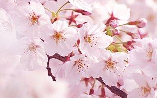 4月のご挨拶★3月は【去る】様に本当にあっという間で…(汗)4月…