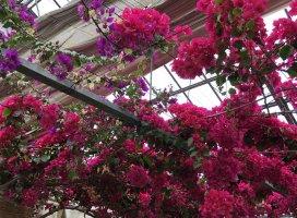 お花〜💐💐💐これなんのお花だろうԅ…