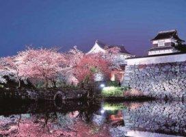 福岡城の夜桜♡水面に映る姿が綺麗です・:*+.\(( °ω° ))/.:…