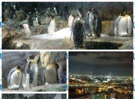 こんにちは!12日〜14日まで大阪に行ってたー!海遊館のペンギ…