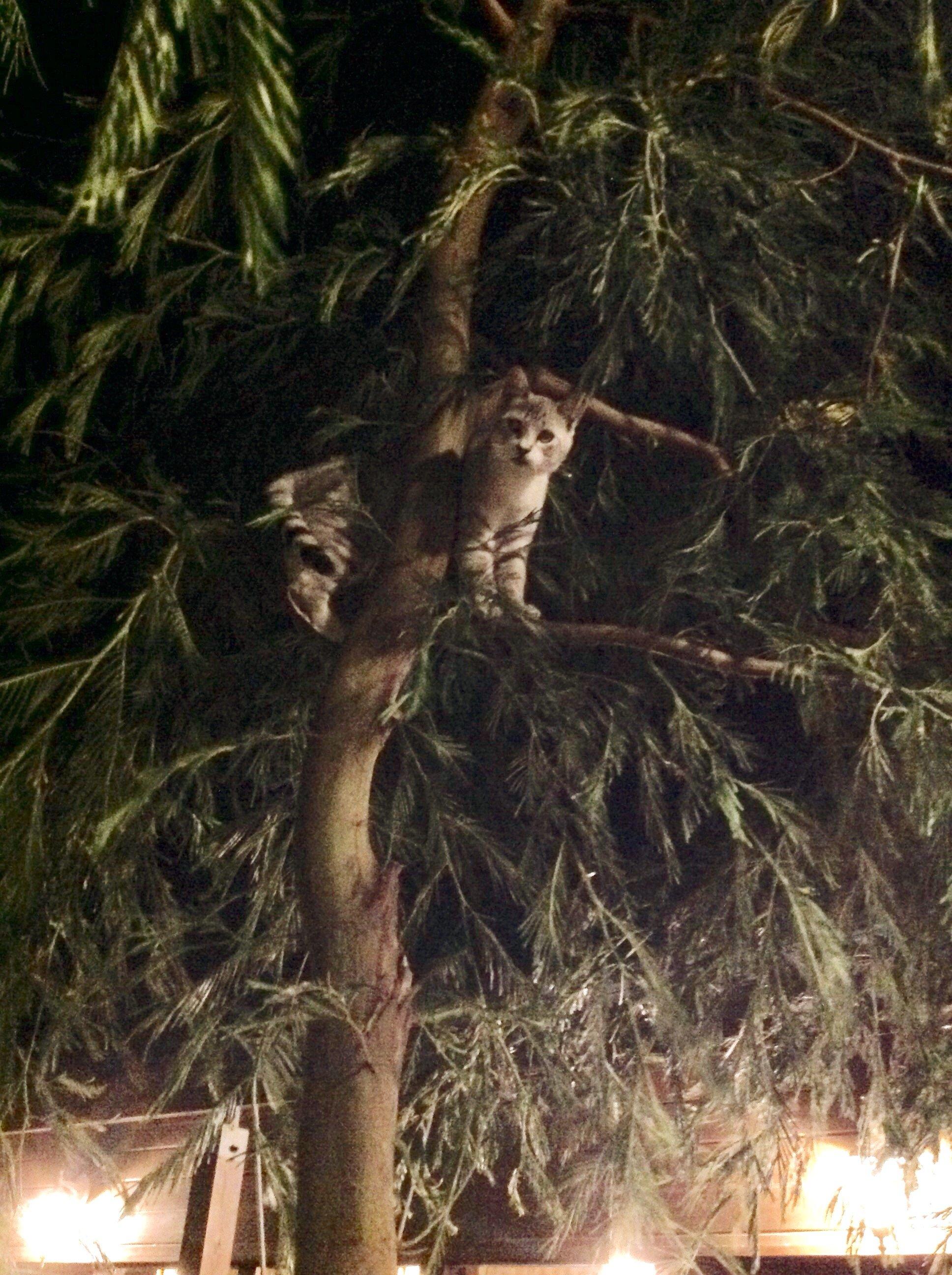 こんばんは♪木登りをしている猫ちゃんを見つけました。