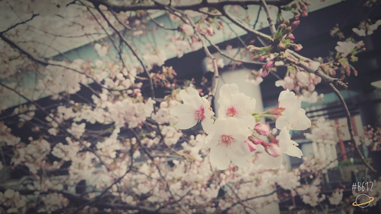 桜さいてたー♡今日から新年度!頑張っていきましょう&#98…
