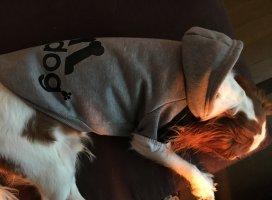 アディドッグ♪♪adidasの犬バージョンの洋服が届きました!着心…