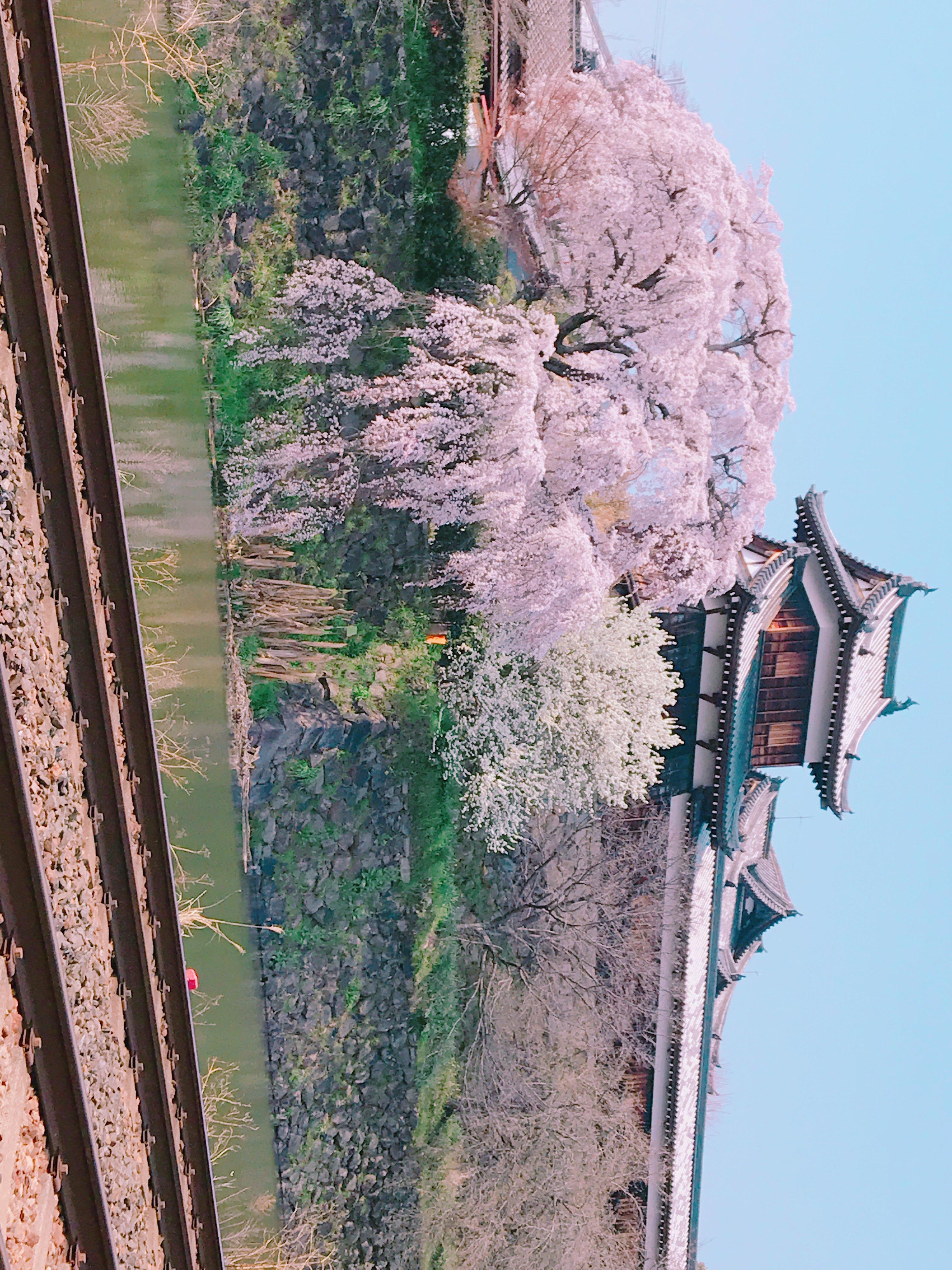 郡山の御殿桜おすそわけ
