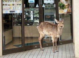 昨日は奈良へ行ってきました。あいにくの雨のお天気でしたが、…