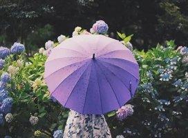 今日は雨/././.☂/././.明日も雨みたい(;゚Д゚)梅雨らしく…