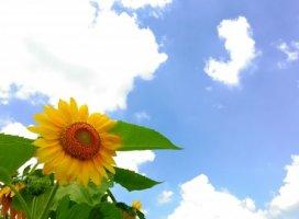 8月♪☀やっと梅雨明けしたみたいですね♪これから夏本番♪…