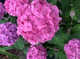 綺麗な紫陽花の咲いてる場所に行ってきました☺