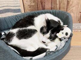 パンダのぬいぐるみ抱えてる!かわいい( ω )!