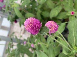 初めてツイートです(^^)綺麗なお花を見つけたよ♪