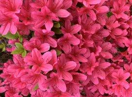 今日はお家でお仕事♪休憩中に画像をあさってたら可愛い花の写真…