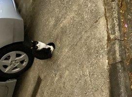 うちの近くに住み着いてるネコちゃん!(写真ヘタクソや)結構…