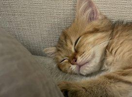 夜中の秘密のチャットドキドキした💓猫って癒されるよね…